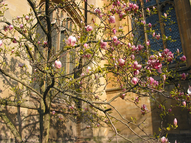 St Mary Virgin, Oxford Spring