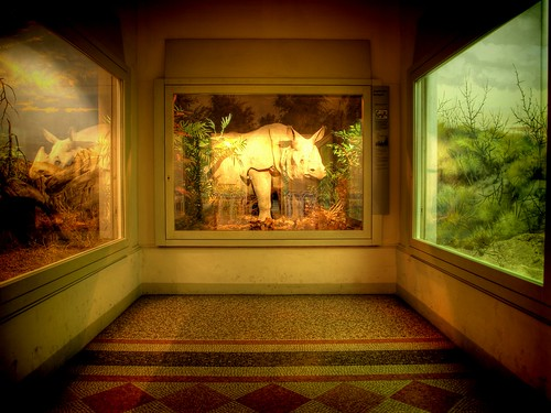 museum room exhibition gotha hdr rhinoceros nashorn museumofnature naturkundemuseum batram nightinthemuseum