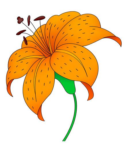 Tiger Lily Vector | Flickr - Photo Sharing!