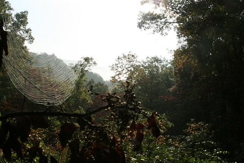 autumn fog clouds river landscape spider web missouri ozarks roaring melton