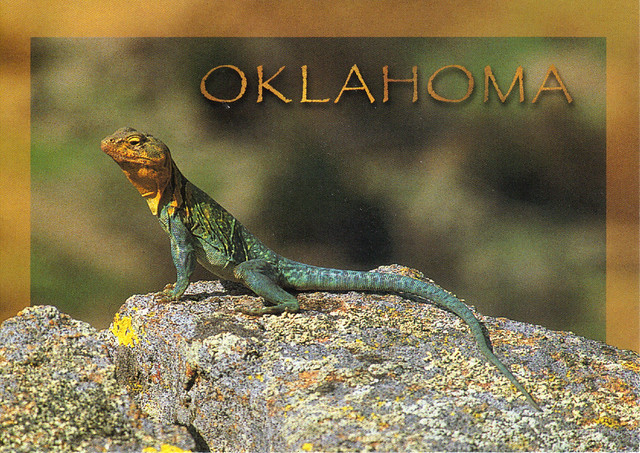 Oklahoma Lizards Pictures http://www.flickr.com/photos/28601488@N05/3054953812/