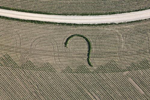 Tracks In The Corn Field