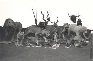 Display Animals