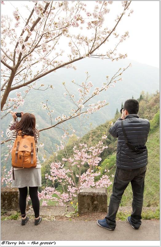 2014-3-01 拉拉山櫻花-15