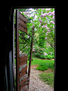 through the broken shed door