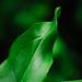 Leaf by JM Clark Photography (jamecl99)