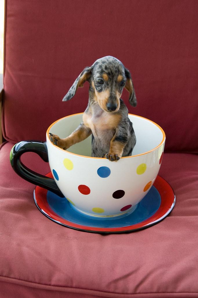 another teacup shot
