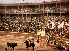 animal sports, sport venue, people, event, sports, bullring, crowd, audience, entertainment, matador, performance, bullfighting, stadium, arena,