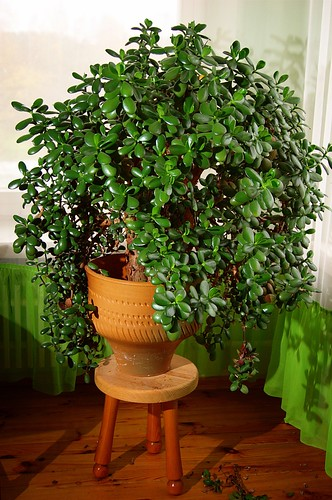 Supermam klubas laim s medelis for Indoor plants easy to maintain