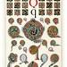 011-Letra Q-Owen Jones Alphabet 1864- Copyright © 2010 Panteek.  All Rights Reserved