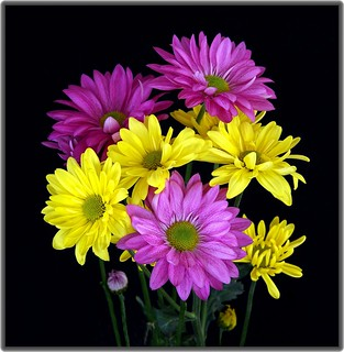 Bouguet of purple & yellow green eye daisies...