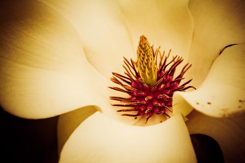 illinois spring unitedstates 5d valleyview mortonarboretum jonathanrobsonphotographycom