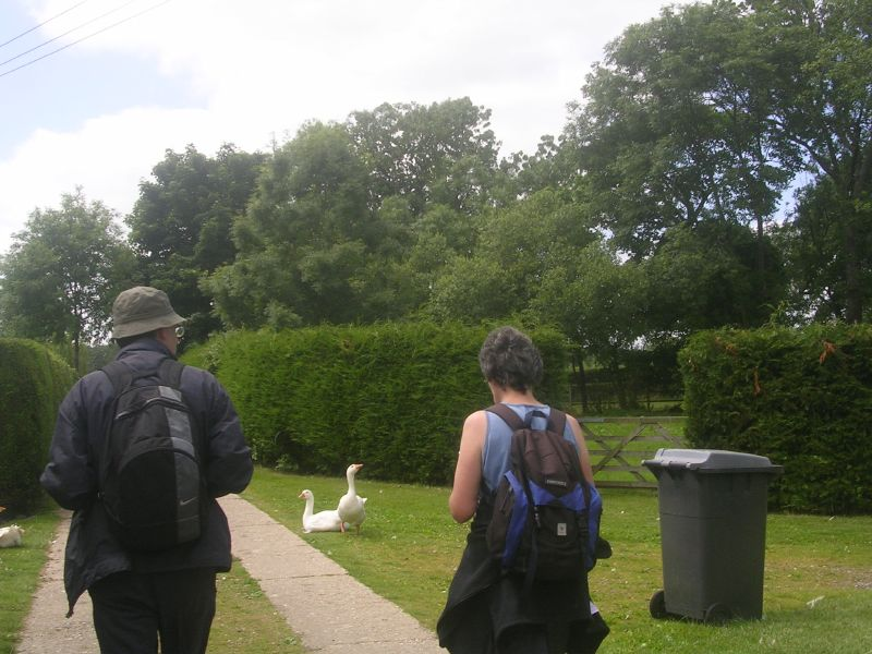 Geese - about to be disturbed Kintbury to Great Bedwyn