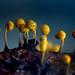 crackin yellow slime mold 3