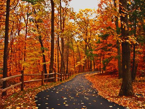 Too sweet for rock 39 n roll fall scene - Pics of fall scenes ...