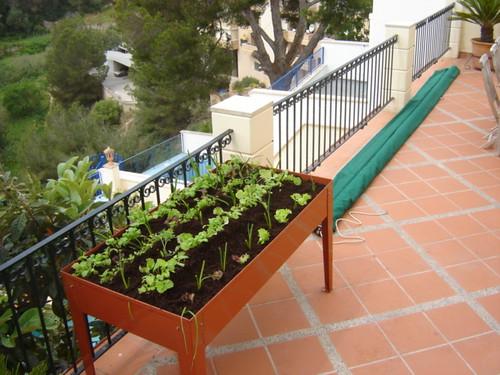 Huerto Urbano en Palma de Mallorca