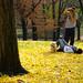 Fall Photo Dog Leaves