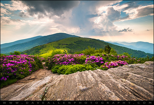 roanmountain roanhighlands janebald appalachiantrail appalachia blueridgemountains tennessee westernnorthcarolina wnc rhododendron blooms blooming flowers roundbald gneiss landscape photography daveallen lightrays rays pink mountainmeadow alpinemeadow 1735mm nature mountains northcarolina nikon nc outdoors scenic sunrays tn highlands daveallenphotography d700 mountain rhododendronbloom mygearandmediamond springflowers outdoorphotographer