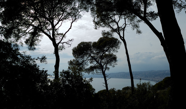 Sea through trees, Mt Boron