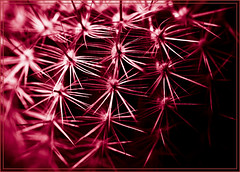 Cactus Abstractus