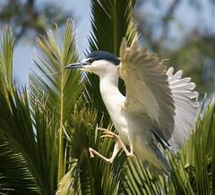 Bayland birds 2008