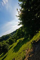 Verts pâturages