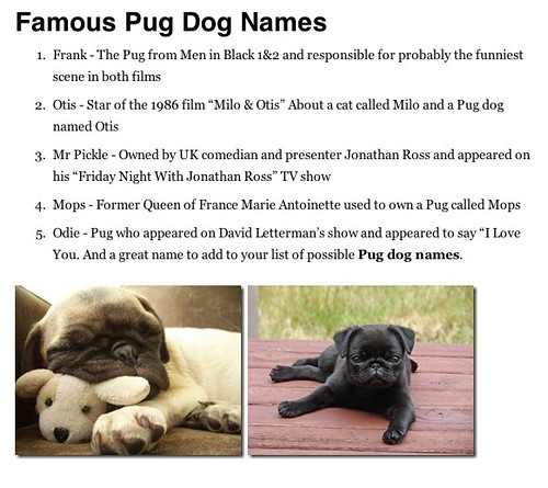 Puppy Names For Dogs With Blue Eyes