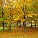 cadono le foglie... by s.gianfranca