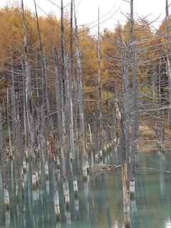 青い池 @ 2008-10-27
