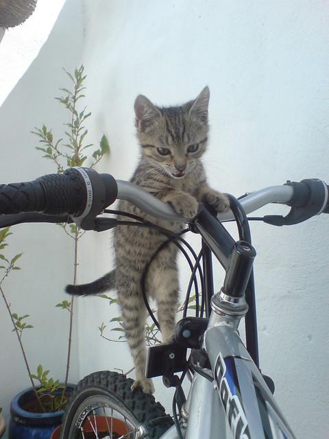 Kitten on a Bike