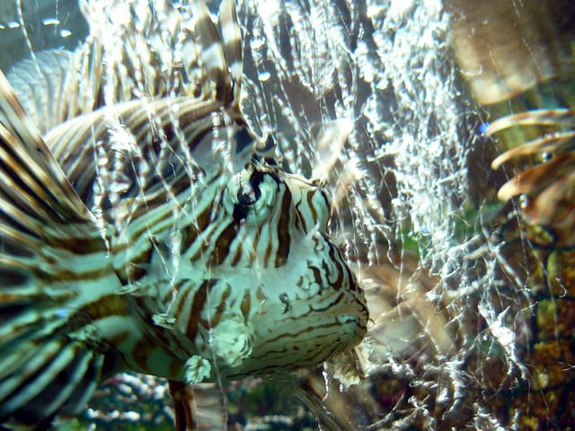 Bubbles This Is Where The Hurdie Gurdie Heebie Geebie Greenie Meenie Man Came In Zap N Cat