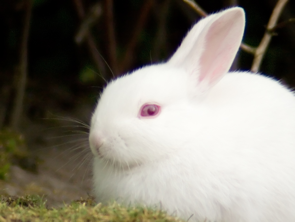 On Black Feral Albino Rabbit By Tomi Tapio Large