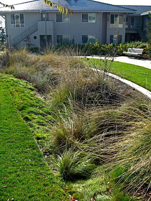 Linear Rain Garden Bioswale Drainage A Photo On Flickriver