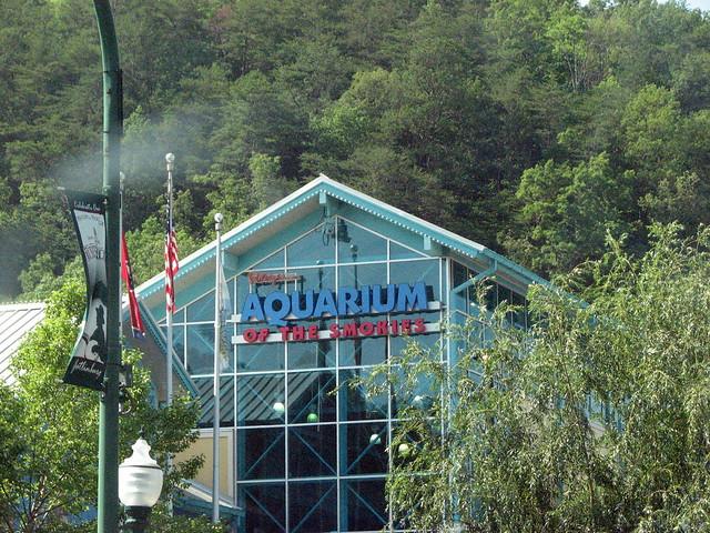 Ripley 39 S Aquarium Gatlinburg Tn Flickr Photo Sharing