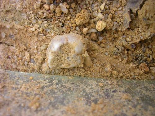 cemetery grave graveyard virginia teeth tomb petersburg burial desecration burialground molar eastview exhumation petersburgvirginia eastviewcemetery osteology odontology bioarchaeology
