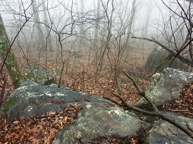 Foggy Morning on Kennesaw Mountain