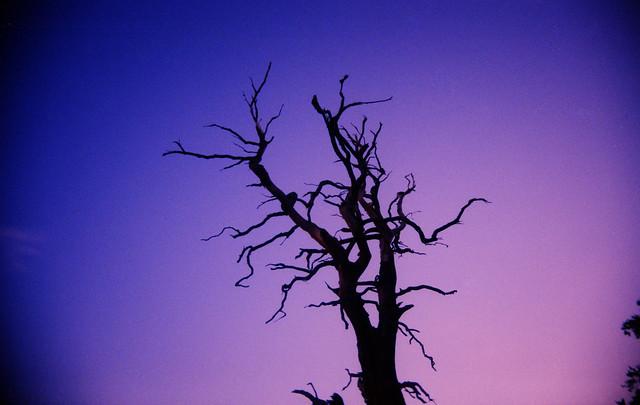 spooky tree #23