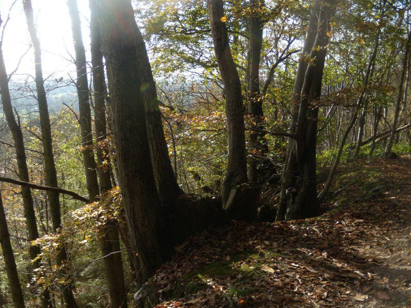 Trees on the edge Sevenoaks Circular