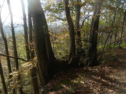 Trees on the edge