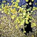 the tree in the front yard by Gail at Large | Image Legacy