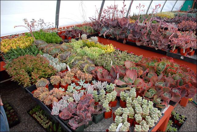 Daniels Succulent Nursery Flickr Photo Sharing