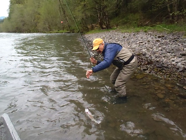 Local trout fishing report mckenzie and willamette rivers for Mckenzie river fishing report
