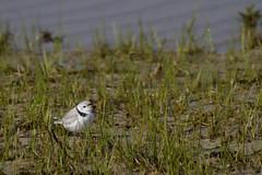 20110507 - Wing Island Birds