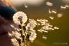 Make a wish ... by Chiara De Bernardi