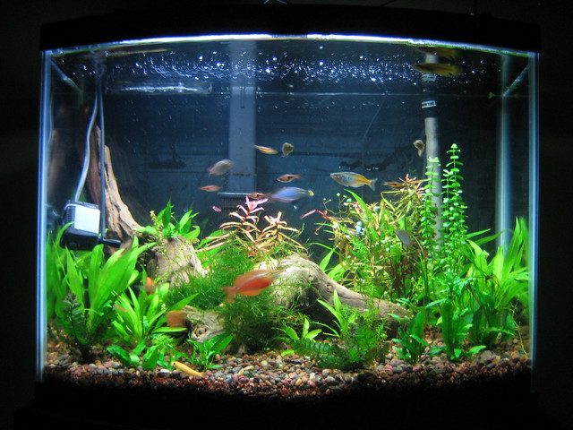 Round Fish Tank : Recent Photos The Commons Getty Collection Galleries World Map App ...