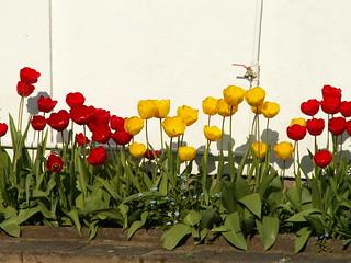 Das Pflanzenkind im Gebergrund die zarten Blüten dehnen und biegen 250
