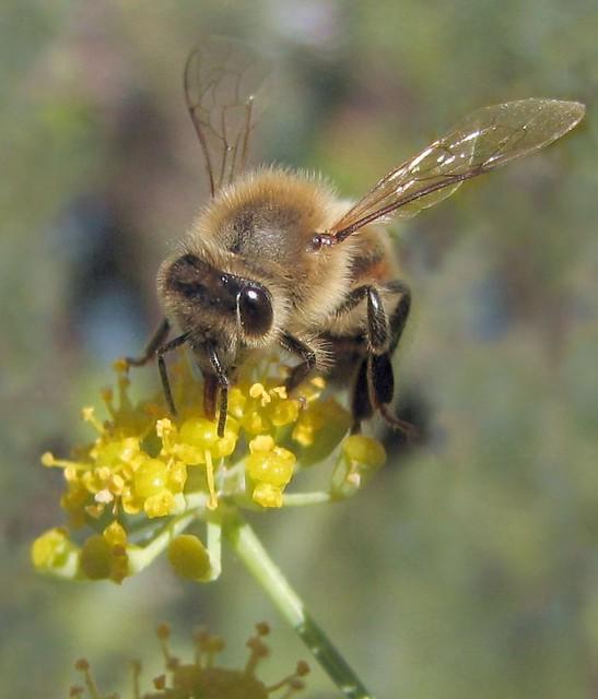 Bee eye from Flickr via Wylio