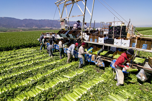 Photo of Farm Workers in California