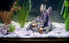 fish(0.0), goldfish(0.0), aquarium lighting(1.0), freshwater aquarium(1.0), aquarium(1.0),