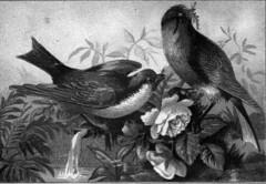 Birds On A Rose